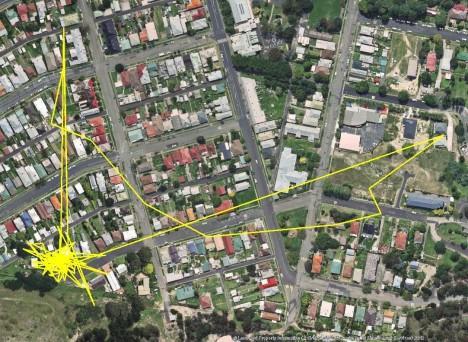 GPS lokátor odhalil, že kočky se v noci vydávají na toulky městem, v tomto případě australským Lithgow.