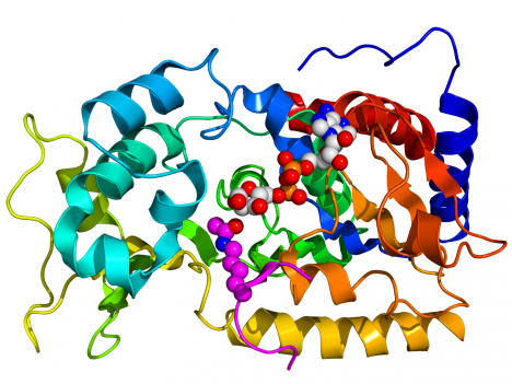 Výzkum enzymů nazývaných sirtuiny pokračuje dále, je možné, že právě tyto látky by dokázaly významně prodloužit lidský život.