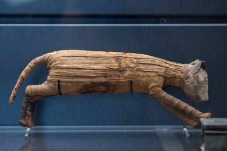egyptian mummy cat