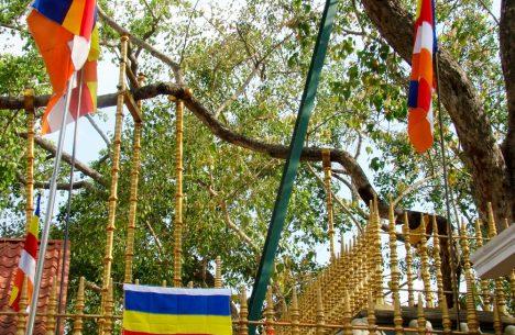 Golden fence guarding the base of Jaya Sri Maha Bodhi tall sacred fig tree of Budda enlightenment in ancient Anuradhapura