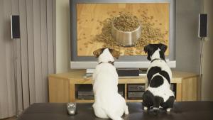Nudí se váš miláček sám doma? Pořiďte mu televizi pro psy!