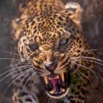 Unikátní techniky přežití: Jak se brání zvířata?