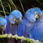 Okřídlená inteligence: Papoušci, kteří nepapouškují