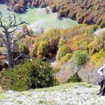 Kde se nachází nejstarší strom v Evropě?