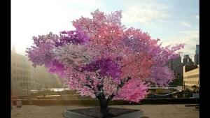 Strom jako z ráje: Plodí 40 odrůd ovoce!