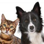 Je chytřejší pes, nebo kočka?