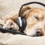 Hudba pro zvířata: Psi milují Boba Marleyho!
