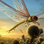 Přehledně: Neuvěřitelné rekordy hmyzí říše!