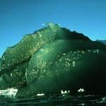 Zelené ledovce nejsou jen anomálií: Mají svou funkci, tvrdí vědci
