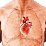 Nemocné srdce: nejčastější příčina úmrtí u nás!