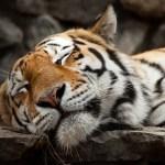 Jací jsou mezi zvířaty největší spáči?
