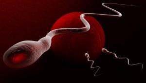 Léto mužské plodnosti nepřeje
