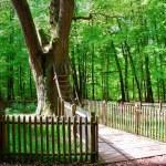 Dub lásky: Strom s vlastní adresou