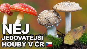 Jaké jsou nejjedovatější houby v ČR?