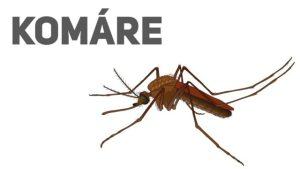 Dějepis jinak: Otravní komáři a jejich krvelačný příběh