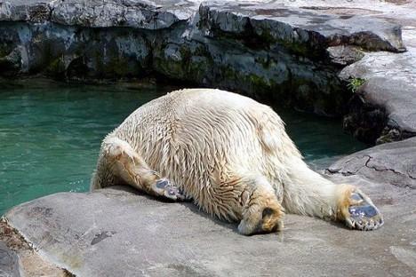 3.Medvědi se alkoholu raději vyhýbají, i když z tohoto snímku se to nezdá