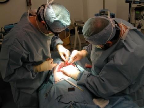 Pravdou je, že lékaři v medicíně často využívají prasečí kožní tkáň nebo srdeční chlopně.