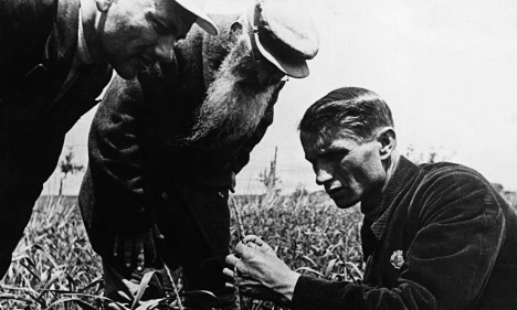 Lysenko Measures Wheat