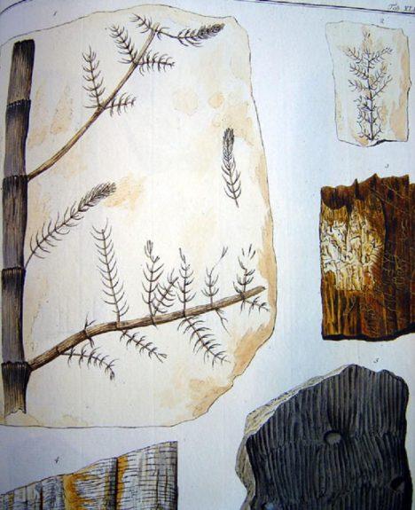 Bohaté Šternberkovy hraběcí sbírky obsahují i fosílie.