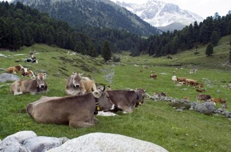 Zpátky ke kořenům? Dokonale sterilní prostředí zřejmě švýcarským sýrům nesvědčí.