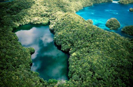 Vodní plocha na ostrově Eil Malk v souostroví Palau je propojena s okolním mořem podzemními kanály.