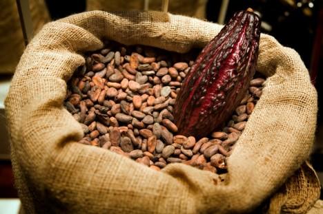 V Česku se ročně sní 60 000 tun čokolády, což je zhruba 6 kilo ročně na každého Čecha.