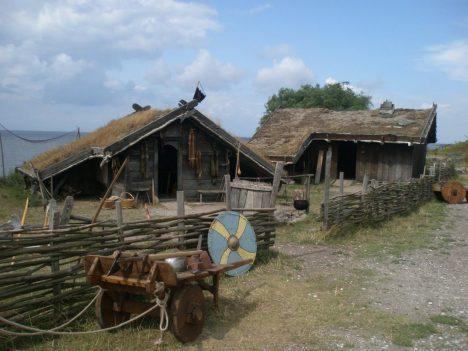 Někteří Vikingové sice opravdu trávili na mořích a v boji skoro celý život, ale drtivá většina žila běžný usedlý život obyčejných zemědělců. Chovali prasata, kozy a dobytek, žili na malých farmách a během roku byste je nerozeznali od jakéhokoliv jiného tehdejšího Evropana. Hlavní složkou stravy Vikingů bylo obilí, pěstovali především žito a ječmen. Oves pak používali především jako píci pro domácí zvířata.