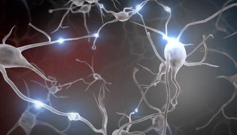 Nervová spojení vzniklá při opakovaném tréninku obaluje látka myielin, která přenos signálu mezi nimi ještě posílí.