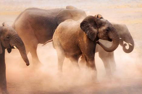 Sloni ze Sumatry byli v roce 2004 schopní zaznamenat zemětřesení až na Filipínách.