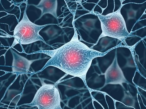 Vědci nyní zkoumají vliv fytosterolů na lidský mozek. Mohly by totiž buňky chránit před senilitou i Alzheimerovou chorobou.
