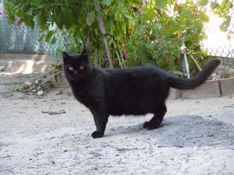 Kočku, zejména černou, považují lidé za vtělení ďábla.