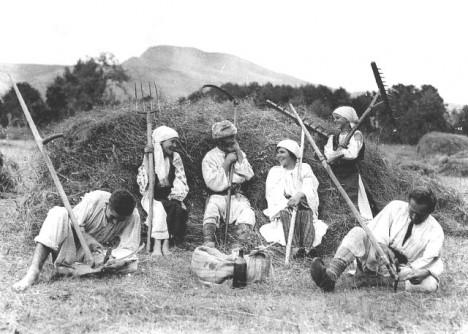 Kosy se nejdříve začaly používat na velkostatcích.