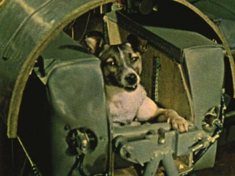 Lajka byla původně toulavým psem, odchyceným na ulici v Moskvě.