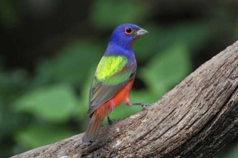 birds-eye-view-dimensions-color_226