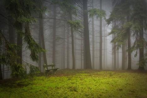 Hockauf se vyskytuje zejména v temných lesích, kde trpělivě čeká na svou oběť.