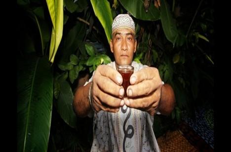 Šamani curanderos s pomocí rostliny léčí mnohé choroby.
