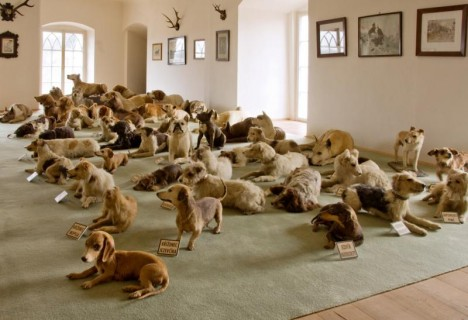 sbirka vycpanych psu 800x547