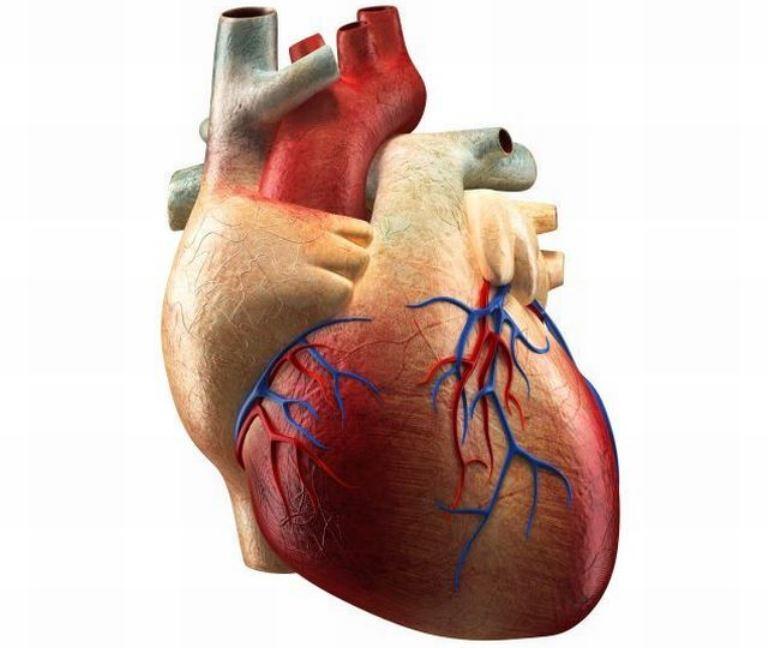 Když srdce nepumpuje dostatek krve, selhávají orgány.