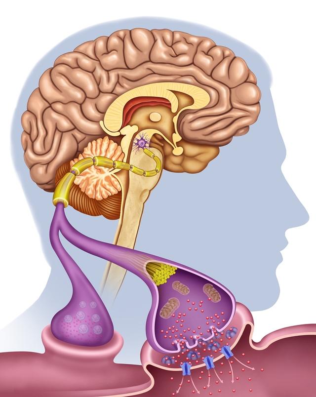Jednotlivé hormony na sebe vzájemně působí a ovlivňují činnost toho druhého. Proto, aby perfektně fungovaly, je zapotřebí dokonalá rovnováha.