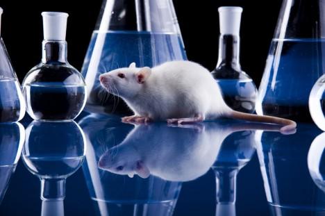 Správnost vědeckých teorií o vlivu sirtuinů na stárnutí se zatím podařilo prokázat při pokusech na myších.