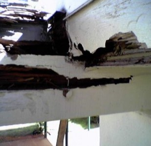 A. Major termite and rot damage to main carrier beams.