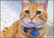 Cooper the cat