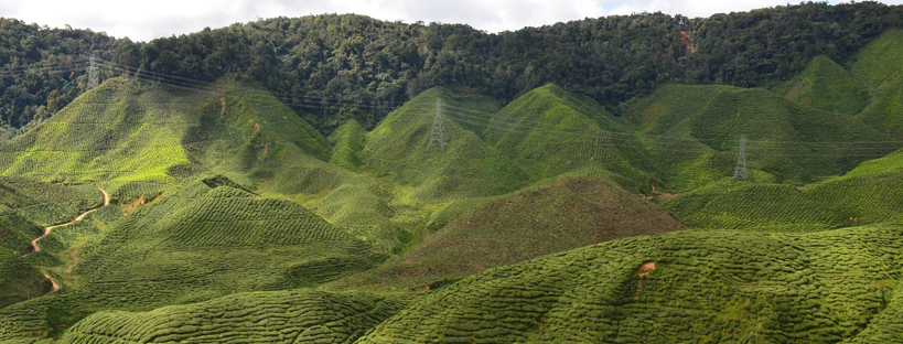 Viaggio in Malaysia: una guida pratica