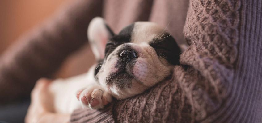 Adottare un cucciolo di cane o gatto: tutto quello che bisogna sapere per farlo vivere in salute