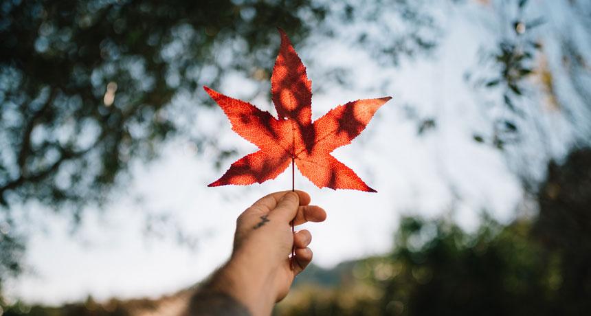 Sull'autunno e i buoni propositi