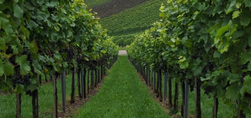 Colli Euganei in Veneto: itinerari e luoghi da visitare