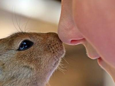 L'importanza di far crescere un bambino a contatto con gli animali