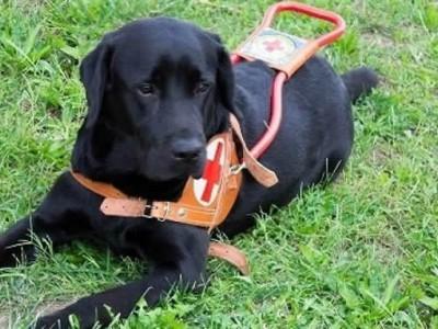 Adottare un cucciolo di cane guida per non vedenti