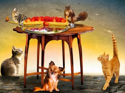 Cani e gatti invitati al banchetto di Natale?