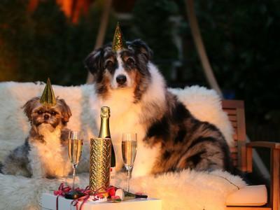 Animali e la paura dei botti di Capodanno